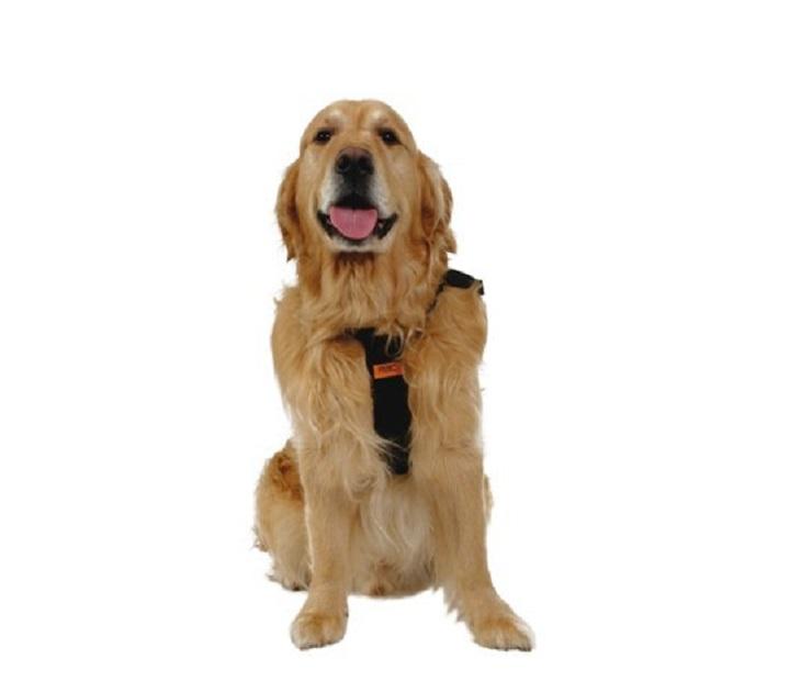 Dog Car Harness XLarge (RACPB15) kατοικίδια