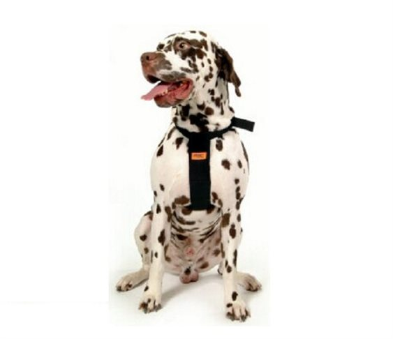 Dog Car Harness Large RAC (RACPB14)